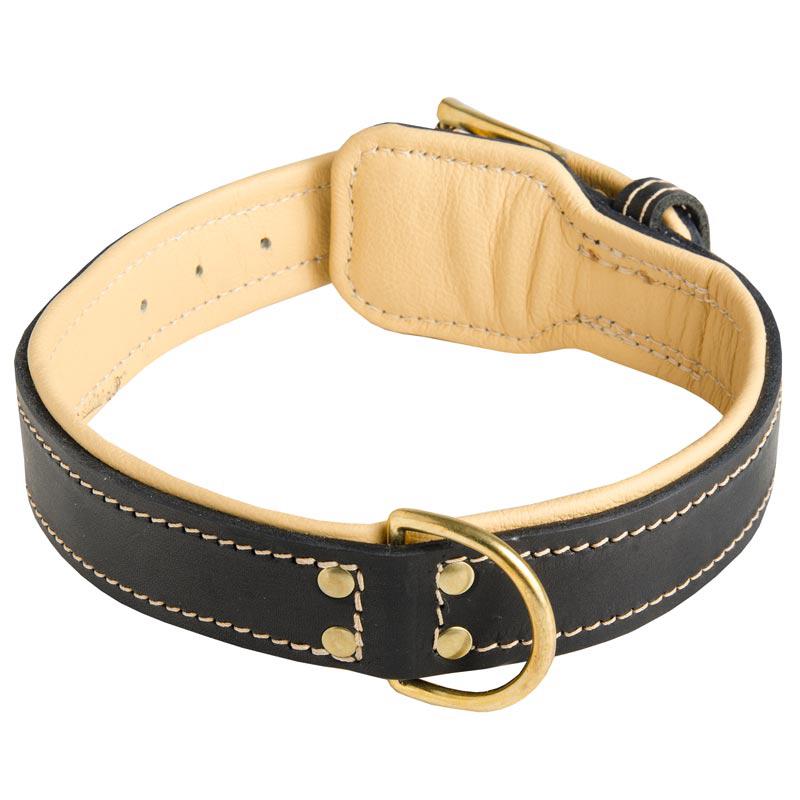 Dog Training Leash Leather Petsmart